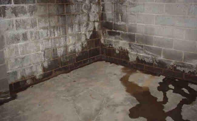 Comment enlever la moisissure de la brique?